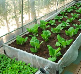 Agricultura. Cultivos interior